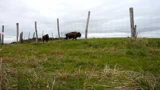 La Pesse dans le Haut-Jura (39) Combe des bisons 25-10-14 15:07