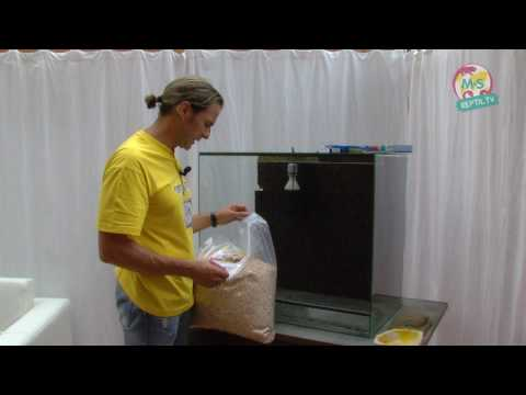 Reptil.TV - Folge 11 - Basics Teil 2 - Einrichten eines Terrariums