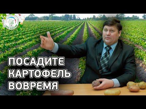 Сроки посадки картофеля. Когда сажать картофель. | выращивание | картофеля | вырастить | открытый | рассада | посадки | посадка | семена | сажать | россии