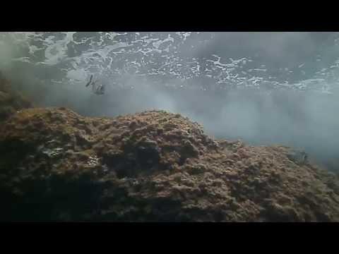 Pesci nel mare di Camogli