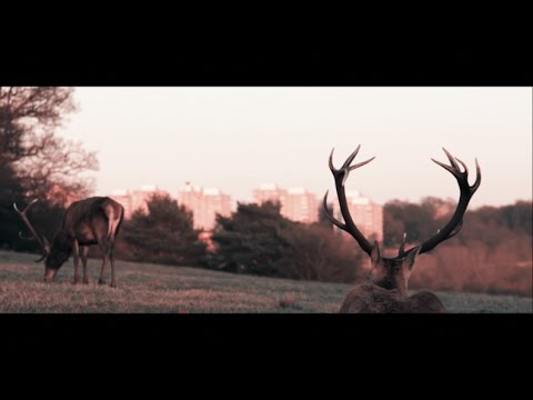 Benjamin Yellowitz - Ash Wednesday (Official Music Video)