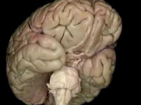 Анатомия человека.