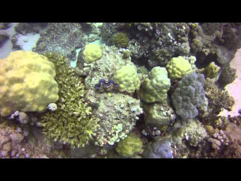 boat trip/dive at red sea, jeddah