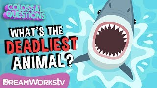 What's The DEADLIEST Animal on Earth? | COLOSSAL QUESTIONS