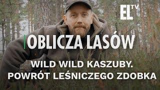 Wild wild Kaszuby. Powrót leśniczego Zdobka   Oblicza lasów #76