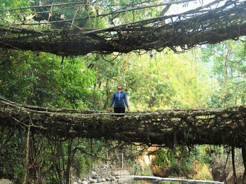Trip to Double decker living root bridge | Cherrapunjee | Meghalaya | Northeast