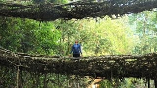 Trip to Double decker living root bridge | Cherrapunjee | Meghalaya | Northeast