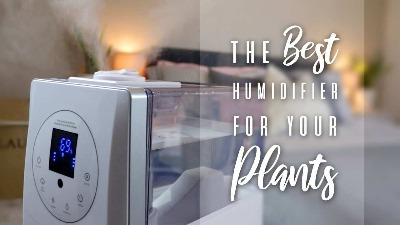 The Best Humidifier For Your Plants