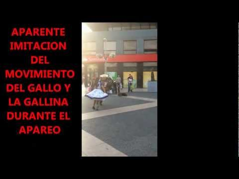 Cueca Chilena...robada Travel Video