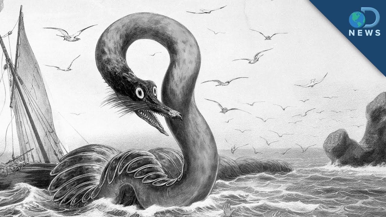 REAL Sea Monster picture, by elemare for: sea monsters ...  |Real Sea Monsters Pictures