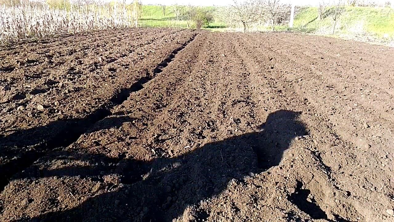 Мотоблок Зубр НТ- 105. Подготовка почвы к посеву кормовой свеклы.