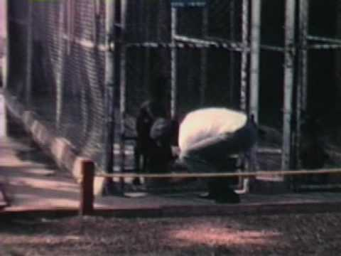 Marine Barracks ( Bouknadel ) Morocco, Africa. 1972-1973. Part One.avi