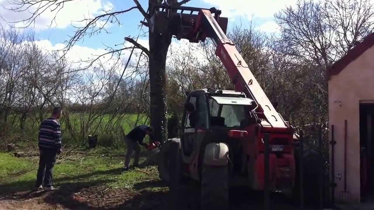 comment abattre un arbre beautiful ecolog d machine qui abat et coupe un arbre en secondes with. Black Bedroom Furniture Sets. Home Design Ideas