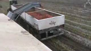 Pik Rite tomato harvester in muddy conditions