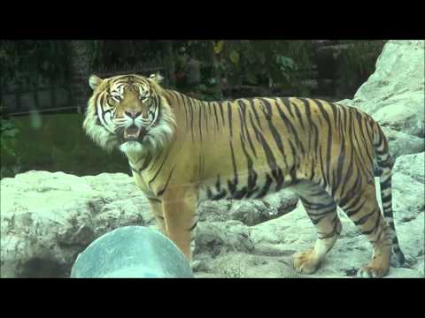 Up close with seal and tiger and Auckland Zoo NZ Animals 3/1