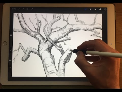 Apple Pencil drawing - HOW TO DRAW BRANCHES - iPad Pro 12.9 art tutorial