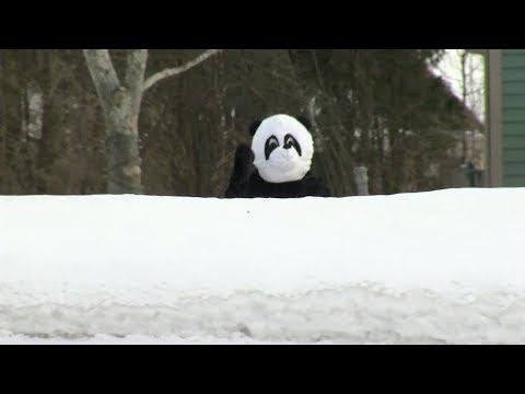 Neighbors Call 911 On Wisconsin Man Dressed In Panda Suit