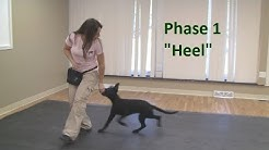 "How to Train a Dog to ""Heel"" (K9-1.com)"