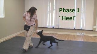 """How to Train a Dog to """"Heel"""" (K9-1.com)"""