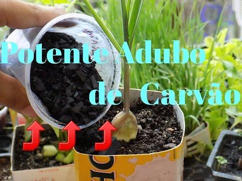 POTENTE ADUBO COM CARVÂO