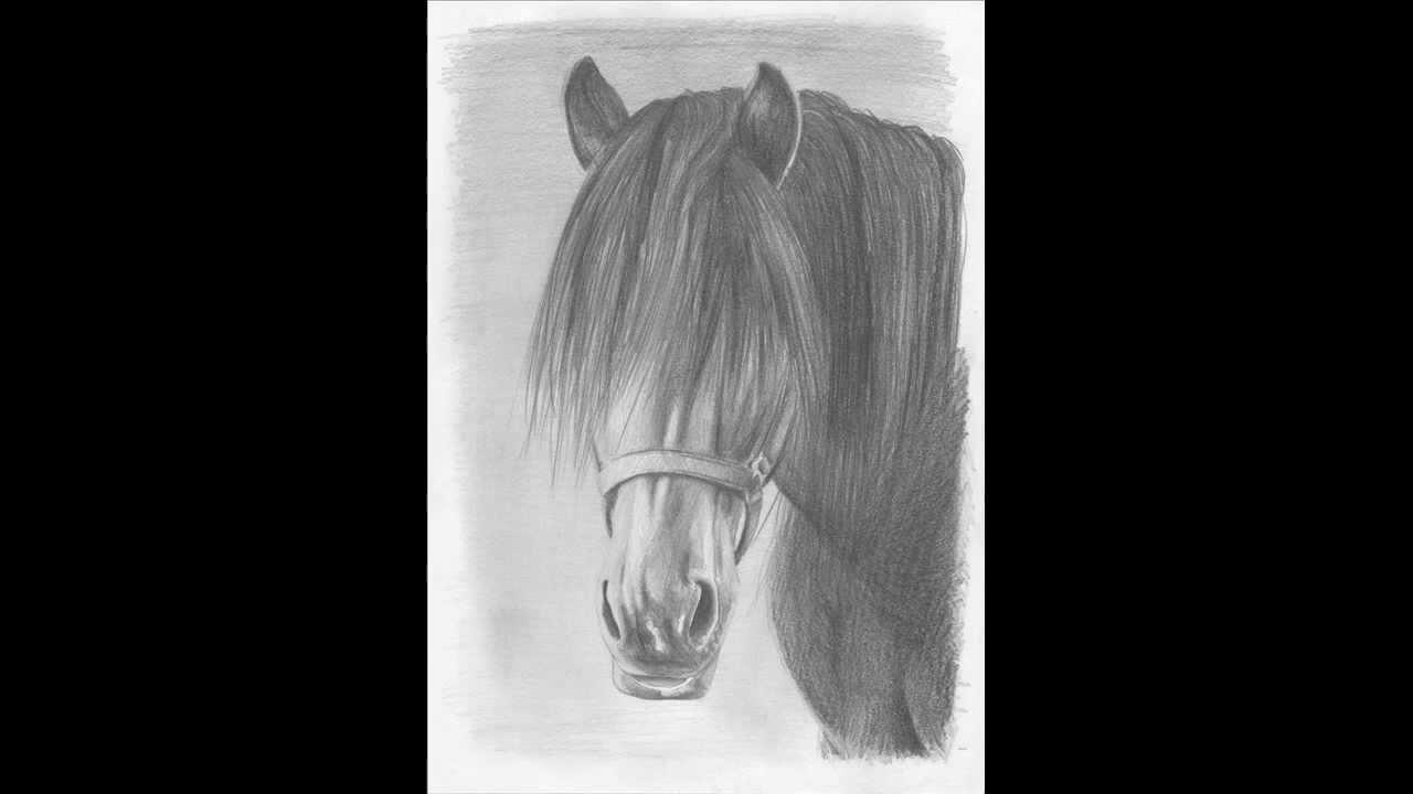 Jak Narysować Konia Krok Po Kroku Hd Narysujcom How To Draw