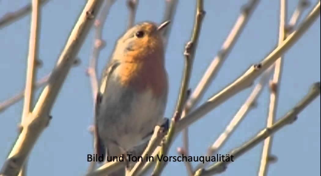 Schulfilm Vögel Am Haus Und Im Garten Dvd Vorschau Youtube