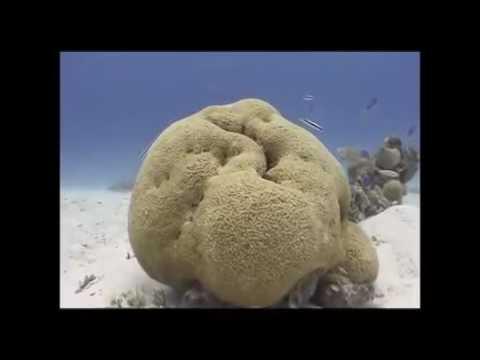 Tuvalu island tales