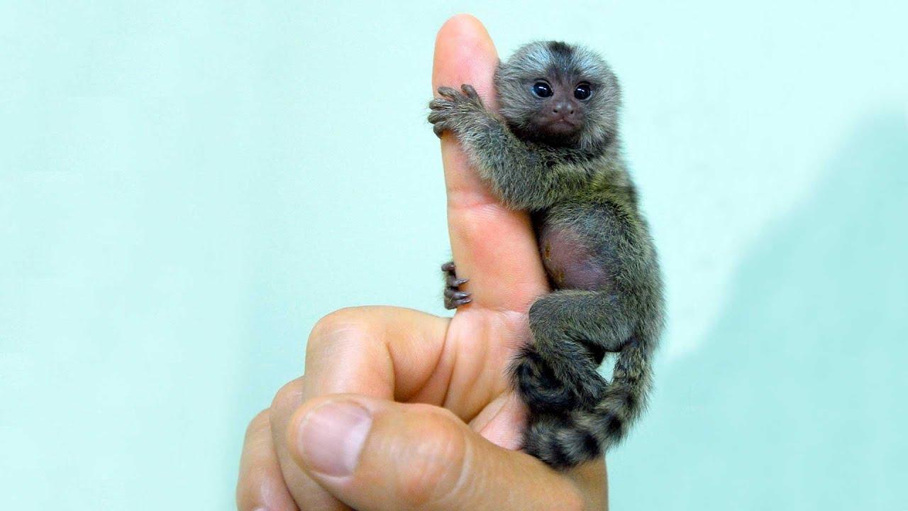 Los 9 animales más pequeños del mundo