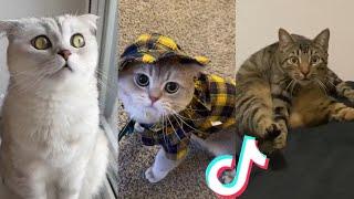 BEST CAT TIKTOKS!! #14