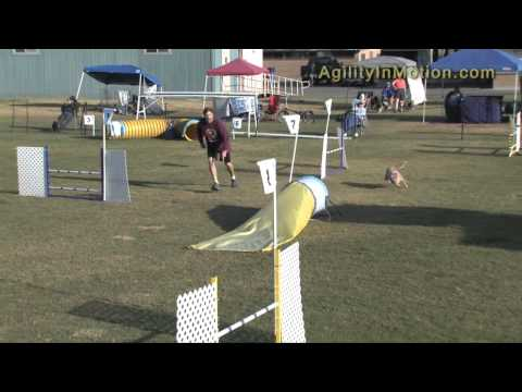 Lucky 10-9-10 FAST Australian Cattle Dog Club of America (ACDCA) 2010 Specialty