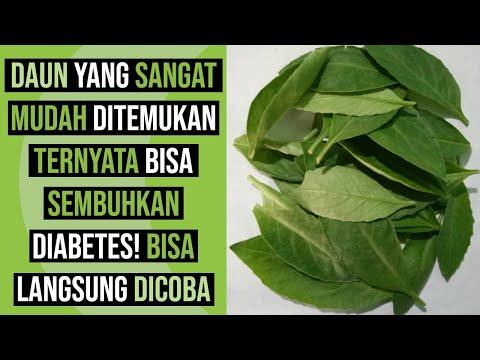 cara-menurunkan-diabetes-dan-kolesterol-dengan-bahan-alami-tanpa-obat,-16-manfaat-daun-sambung-nyawa