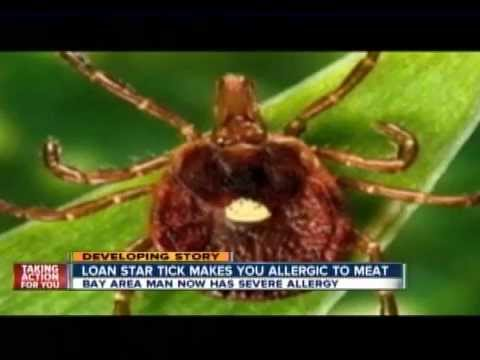 The Lone Star Tick's bite can create a meat allergy
