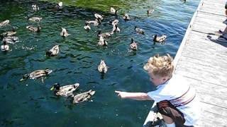 Feeding ducks at Miramar Lake