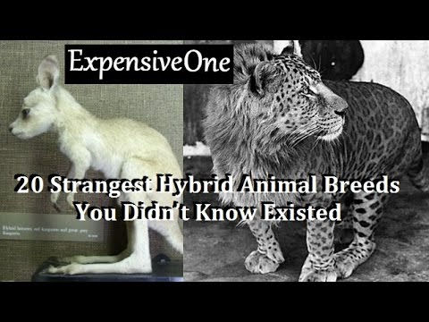 20 Strangest Hybrid Animal Breeds You Didn't Know Existed