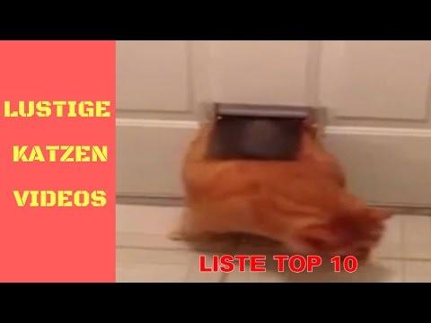 ListeTop10 – Lustige Katzen Video zum Totlachen – Lustige Katzen Vine (5)