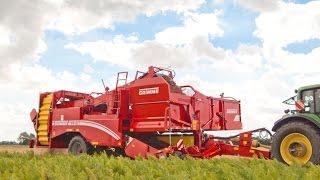 GRIMME SV 260   2-row Bunker Harvester   carrot harvest