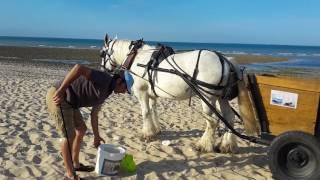 Jérôme et Grisou sur la plage de basse-Benaie à Sainte-Marie de Ré