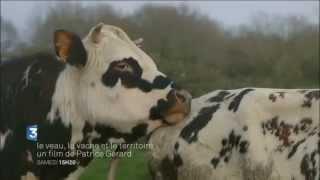 Le veau, la vache et le territoire - *Petit précis de biodynamie