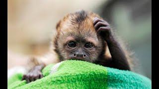 Самые смешные животные видео прикольные животные видео с животными видео приколы