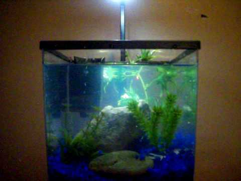 How to set up a 2 gallon fish tank quick and easy youtube for Youtube fish tank