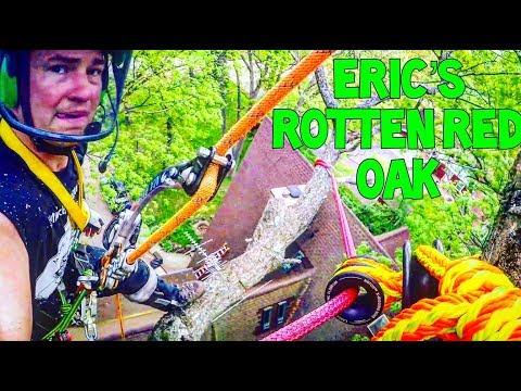 Eric's Rotton Red Oak