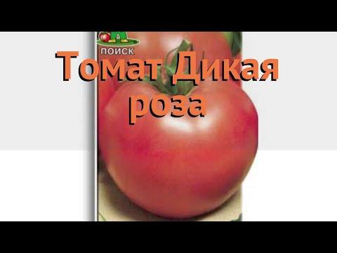 Томат обыкновенный Дикая роза (dikaya roza) 🌿 Дикая роза обзор: как сажать, семена томата Дикая роза