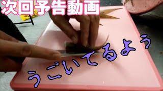 次回予告 ハゼの天ぷら おもてなしクッキング! かいしんげき (劇)快心...