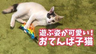 遊びが大好き!可愛いおてんば子猫を無言で愛でる動画