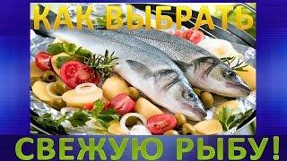 Как выбрать свежую рыбу и не нарваться на недоброкачественный улов