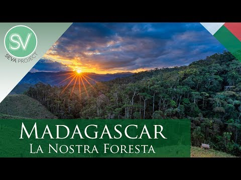 Madagascar - La Nostra Foresta (4K Ultra HD) - SEVA Project