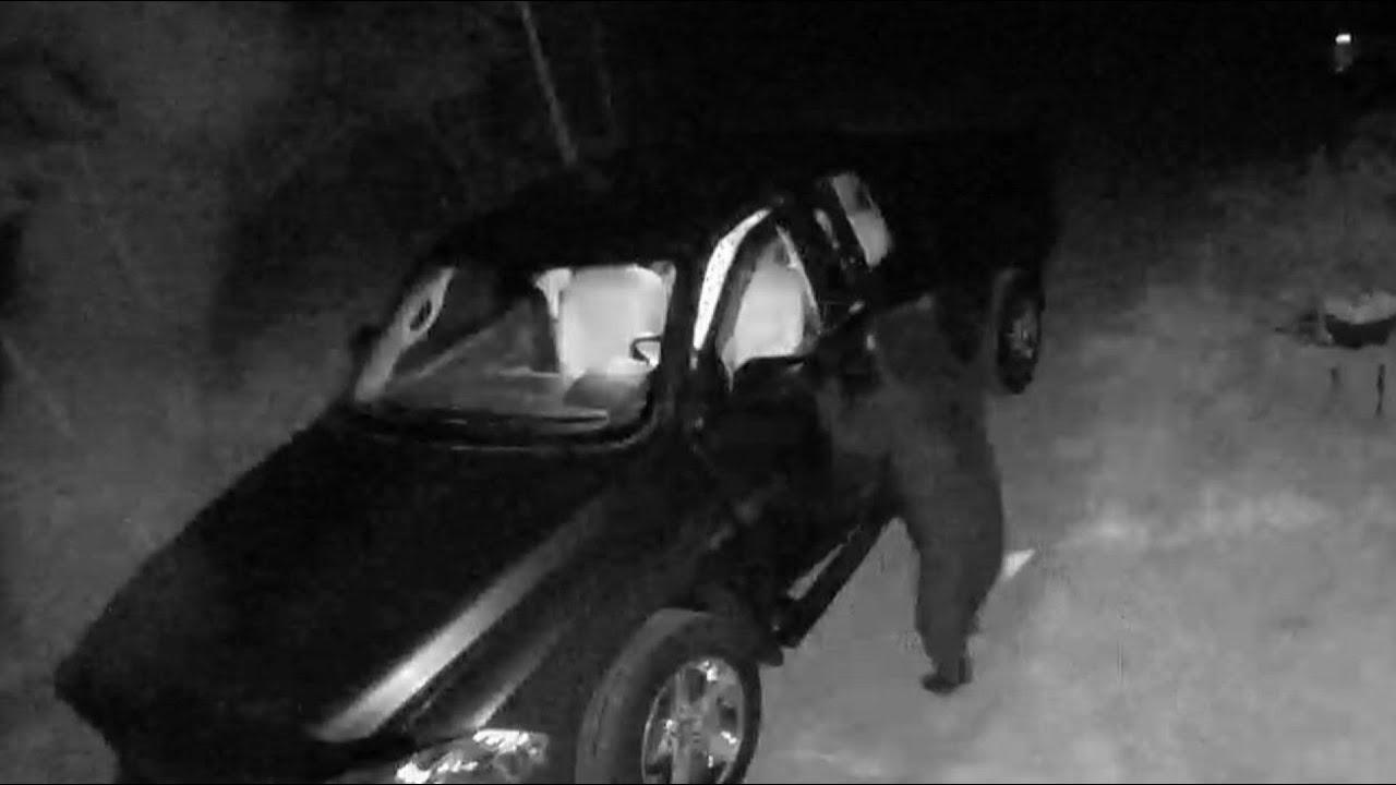 فيديو | دب يسطو على سيارات مركونة والشرطة الأمريكية تصفه بـ-المجرم المتسلسل-  - نشر قبل 2 ساعة