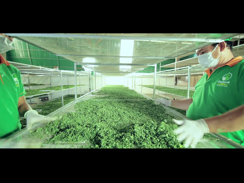 Moringa manufacture (Cambodia)