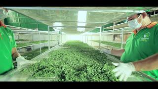 Moringa manufacture (Cambodia) thumbnail