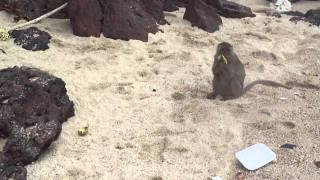 Паттайя-остров Ко Ларн-пляж Манки Бич (1)(Thailand Pattaya-Ko Larn-Monkey Beach., 2011-09-29T08:05:46.000Z)